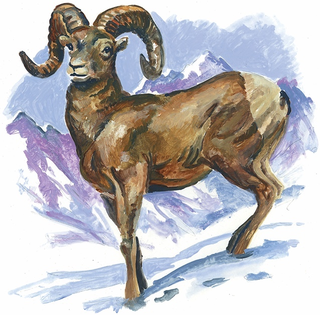click to enlarge image 105876_9781607323587c013f006jpg state animal rocky mountain bighorn sheep state animal rocky mountain bighorn sheep